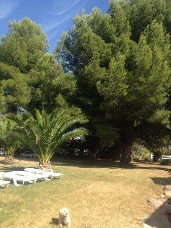 Residence & Hotel Arcadius : Jardin