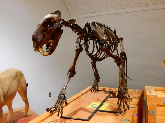 Sternberg Museum Of Natural History Reviews