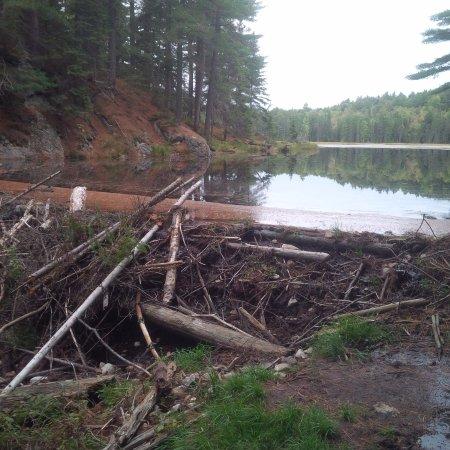 Whitney, Canada: Beaver Dam Hike