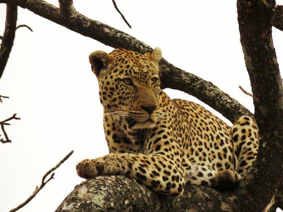 Honeyguide Khoka Moya & Mantobeni Camps: Surveying his domain.