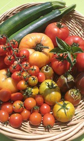 Trets, France: délicieuses tomates anciennes (en saison)