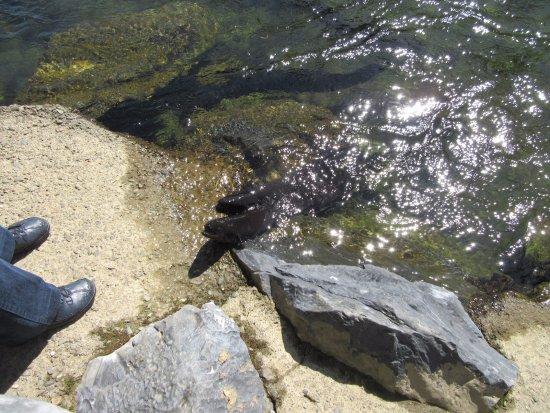 Takaka, New Zealand: eels coming ashore