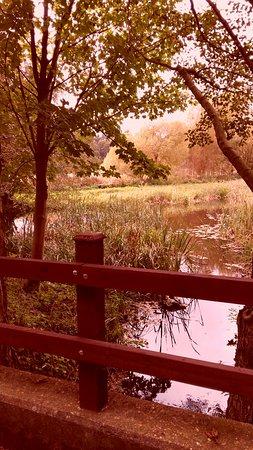 Mundford, UK: Our Autumnal walk around the Arboretum