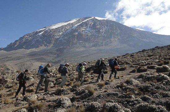 5 dage - Mount Kilimanjaro Klatring...