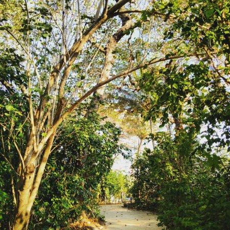 Green Island, Australia: IMG_20170922_123211_178_large.jpg