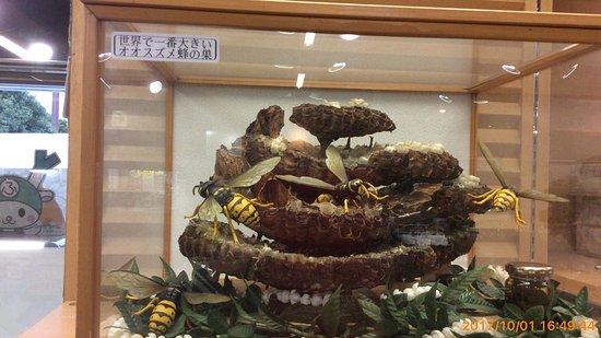 Viajes a Fukaya