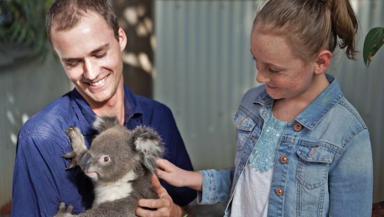Bullsbrook, ออสเตรเลีย: Koala Experience