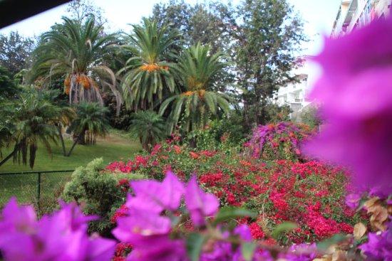 Parque Vacacional Eden: Blick in den Garten