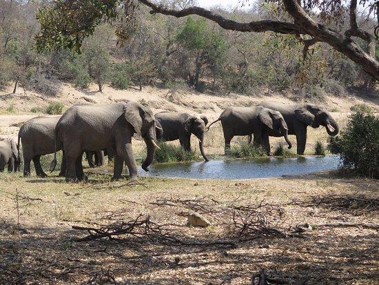 Timbavati Private Nature Reserve, Sudáfrica: Elephants at lodge's waterhole
