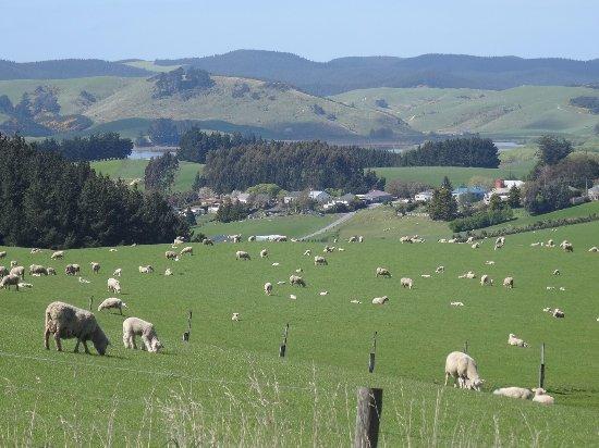 Invercargill, New Zealand: Sheep's, millions of them