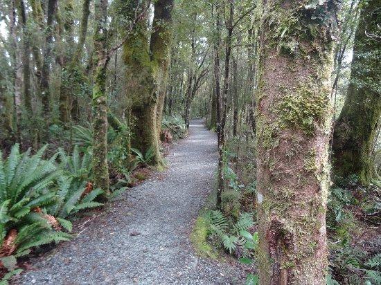 Invercargill, Νέα Ζηλανδία: Rainforest