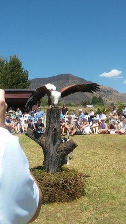 Falcon Ridge Bird of Prey Centre Foto