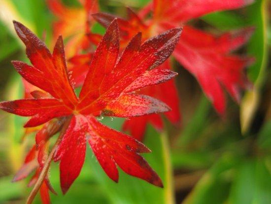 Prefectura de Nagano, Japón: photo4.jpg