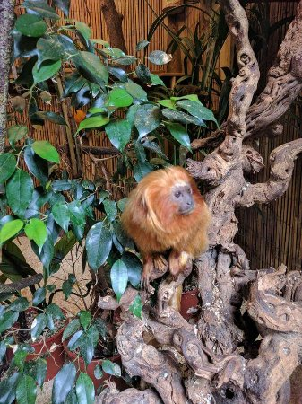 Birmingham Wildlife Conservation Park: FB_IMG_1507199577084_large.jpg