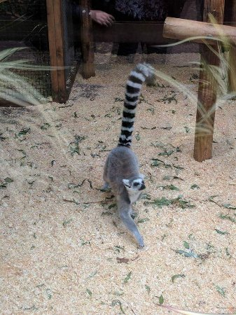 Birmingham Wildlife Conservation Park: FB_IMG_1507199571756_large.jpg