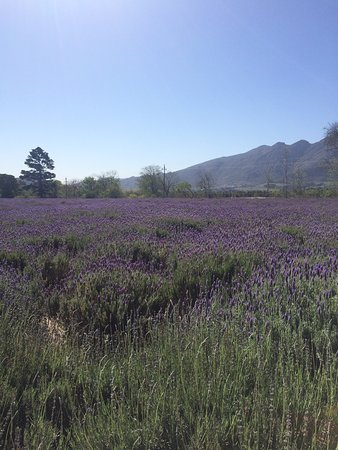 Lavender Farm Guest House Franschhoek: photo0.jpg