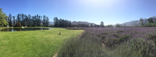 Lavender Farm Guest House Franschhoek: photo1.jpg