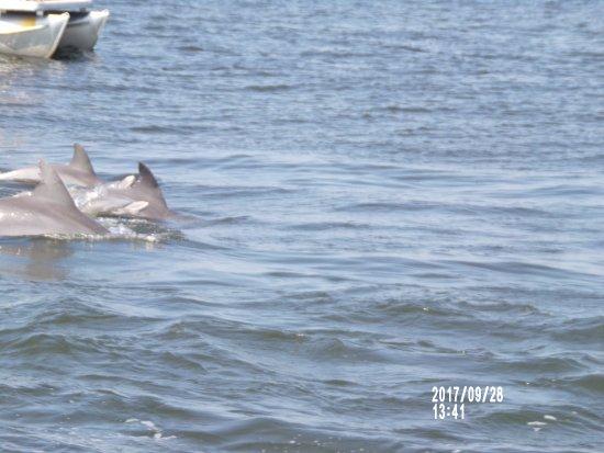 Dolphin Tours Myrtle Beach Sea Thunder