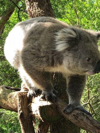 Cowes, Australië: photo1.jpg