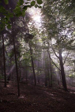 Průvodce České Švýcarsko: Hike through the forest