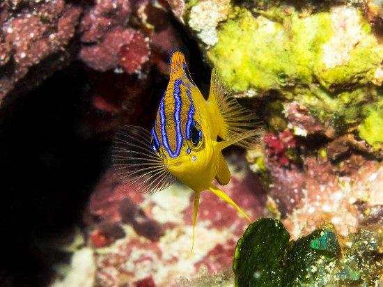 Santo Domingo, Dominican Republic: La Caleta Underwater National Park is a mecca for scuba divers.