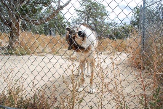 Ramah, Nowy Meksyk: Wild Spirit Wolf Sanctuary Tour
