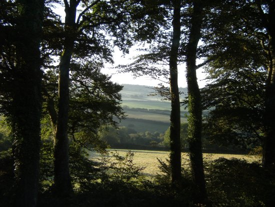 Yelverton, UK: View from Halcyon Starbed Hideaway