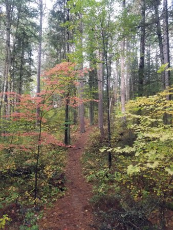 Blackduck, MN: Lost Forty Self-Guided Trail