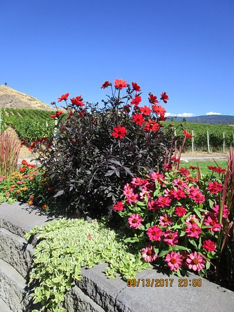 Okanagan Falls, Kanada: Vineyard & mountain Views from the patio & flower garden.