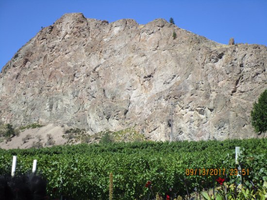 Okanagan Falls, แคนาดา: Vineyard & mountain.