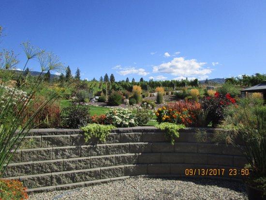 Okanagan Falls, แคนาดา: Views from the patio lounge.
