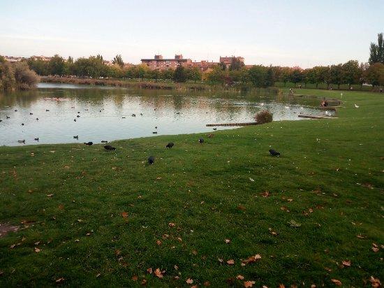 Laguna de Duero, Испания: Entorno del Lago