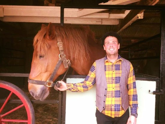Dorset Heavy Horse Farm Park: Ashley with Suffolk Punch Abbey Rose