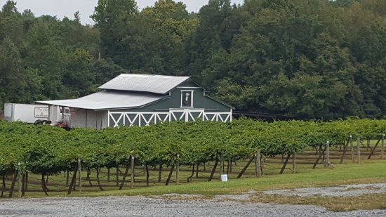 Midland, NC: View of the vineyards from the parking lot