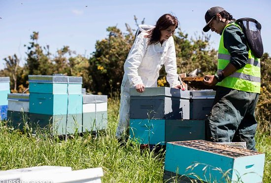 Awanui, New Zealand: Mana Kai Beekeepers and Beehives