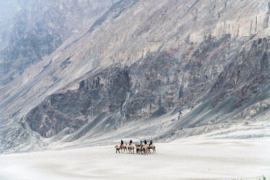 Ju-Leh Adventure: Camel ride at Nubra Valley