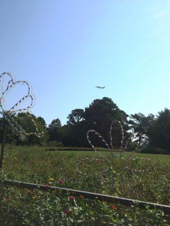 Norfolk Botanical Garden: The Gardens is near the airport.
