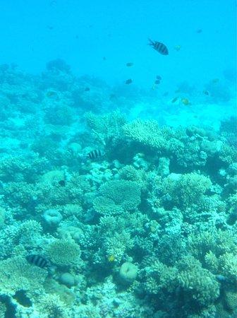 Buceo Isla de Pascua : photo1.jpg