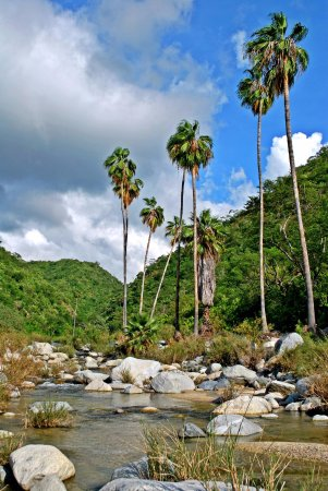 Todos Santos, Mexico: We walked 15 minutes north of the ranch and admired the palm trees