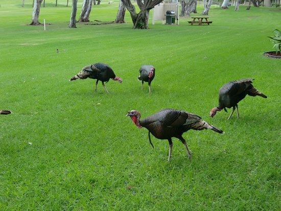 Waikoloa, HI: フェアウェイを外れると、鳥だらけ!