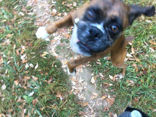 Hillsville, فيرجينيا: Zeus says helli