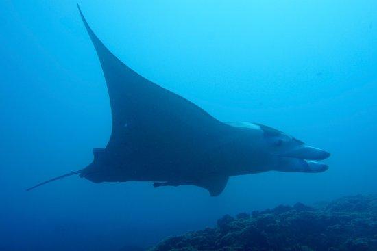 Top Dive, Bora Bora