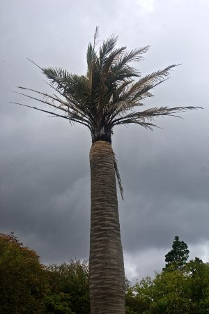Cahersiveen, Irlanda: Yes there are palm trees in Ireland