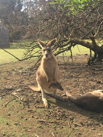 Taranna, Australia: photo6.jpg