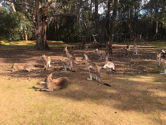 Taranna, Avustralya: photo8.jpg