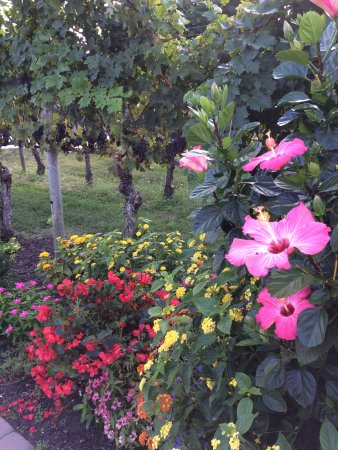 Cape May Winery: flowers and grape vines in the patio area