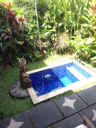Tirta Ayu Hotel & Restaurant: Our Plunge Pool