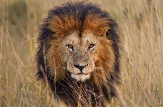 Lion Park Tour desde Johannesburgo