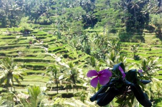 Ubud Special Guided Tour