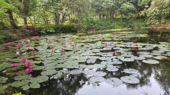 Muang Tak, Tayland: Lovely Gardens....